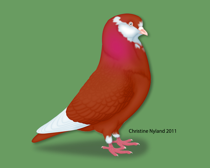 https://www.christinenyland.com/wp-content/uploads/2018/05/American-Roller-Red.png